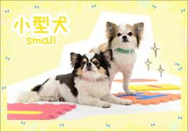 小型犬首輪の入口