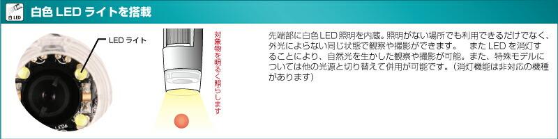 dino-06-02.jpg