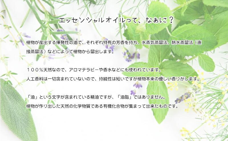北海道 富良野産 ラベンダー-4