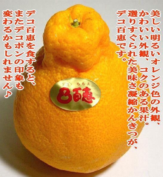 佐賀 吉森 デコ百恵 (デコポン 不知火)