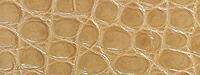 アリゲータ(ツヤアリ)丸斑