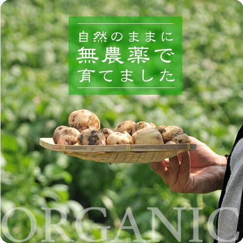 無農薬商品バナー