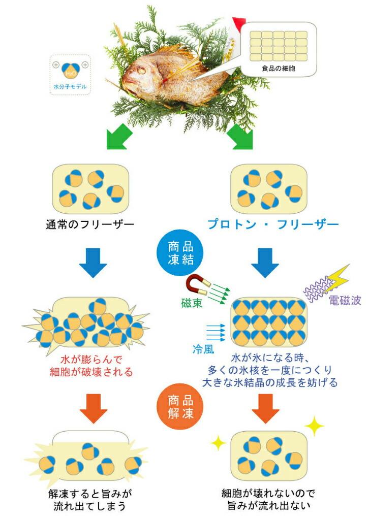 プロトン説明の図