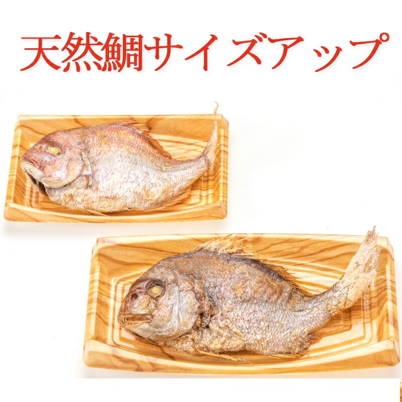 天然祝い鯛姿焼き サイズアップ
