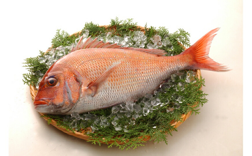 天然祝い鯛姿焼き 生イメージ
