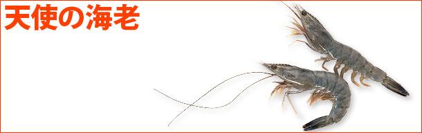 tenshi_kanban_2