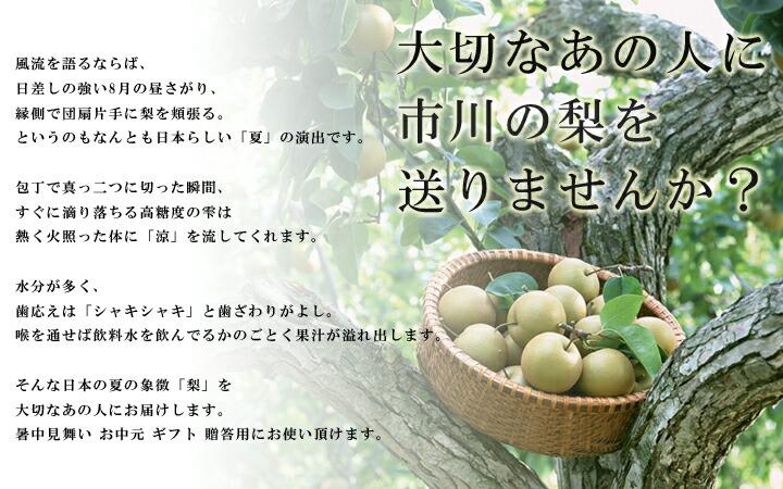 日本の夏には梨がある