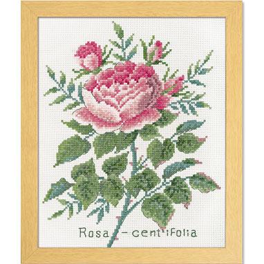 Olympusクロスステッチ刺繍キット 7504 「ローザセンティフォーリア」