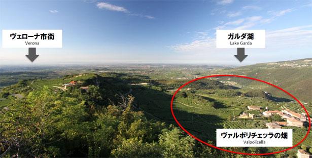ヴァルポリチェッラの畑