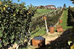 カンティーナとブドウ畑