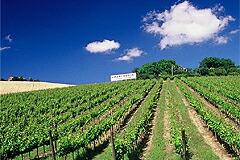ウマニ ロンキのブドウ畑