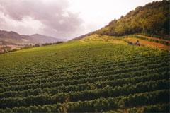 ポデーリダルネスポリの畑