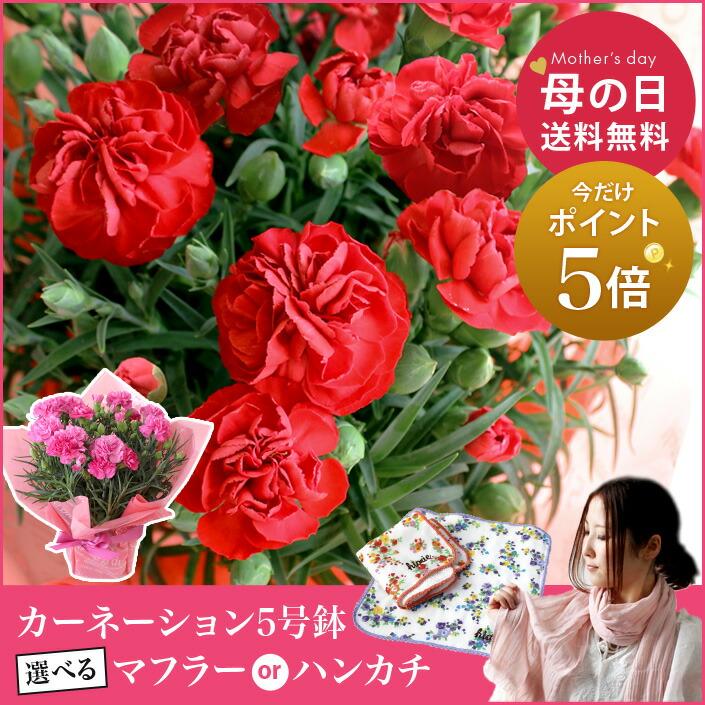 お花のご注文は 5/9(火)am11:59まで