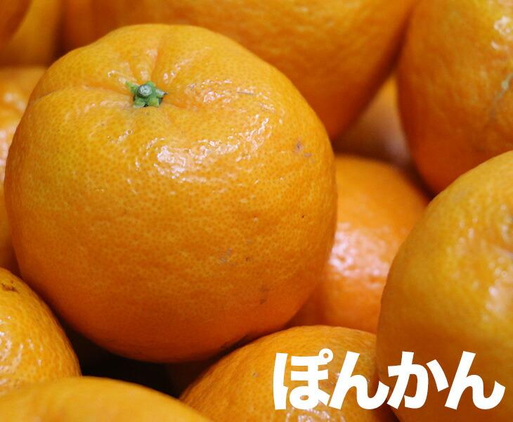 東洋フルーツ