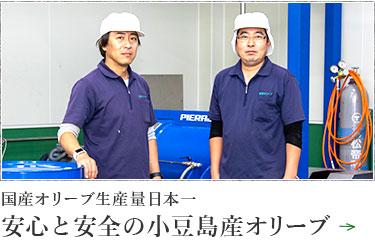 国産オリーブ生産量日本一 安心と安全の小豆島産オリーブ