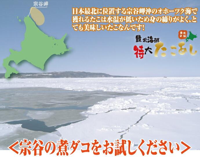 日本最北の地で獲れた極上のたこです