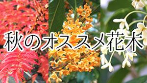 秋のオススメ花木
