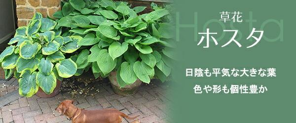 https://item.rakuten.co.jp/tsuchikko/c/0000000239/