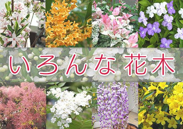いろんな花木