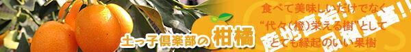 土っ子倶楽部の自慢の『柑橘類』