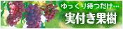 せっかちさんのための実付き果樹