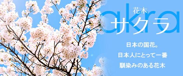 あなただけの桜の樹を見つけて