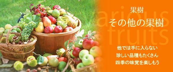 りんごやさくらんぼ、色々な果物の樹たち