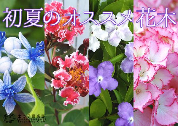 初夏のおすすめ花木
