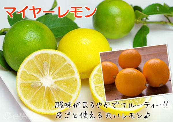 マイヤーレモン
