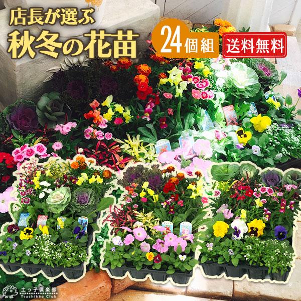 秋冬の花苗24個セット【送料無料】