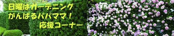 生け垣におススメの植物