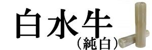 白水牛(純白)