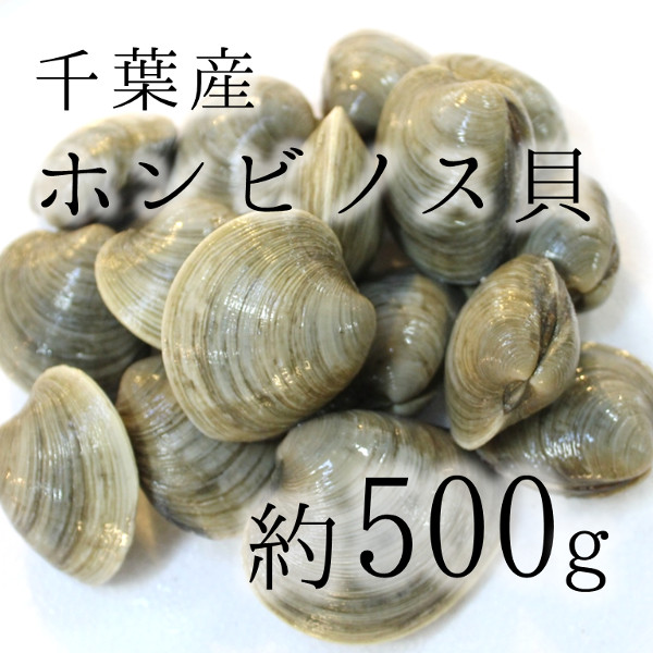 ホンビノス500g