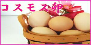 コスモス卵