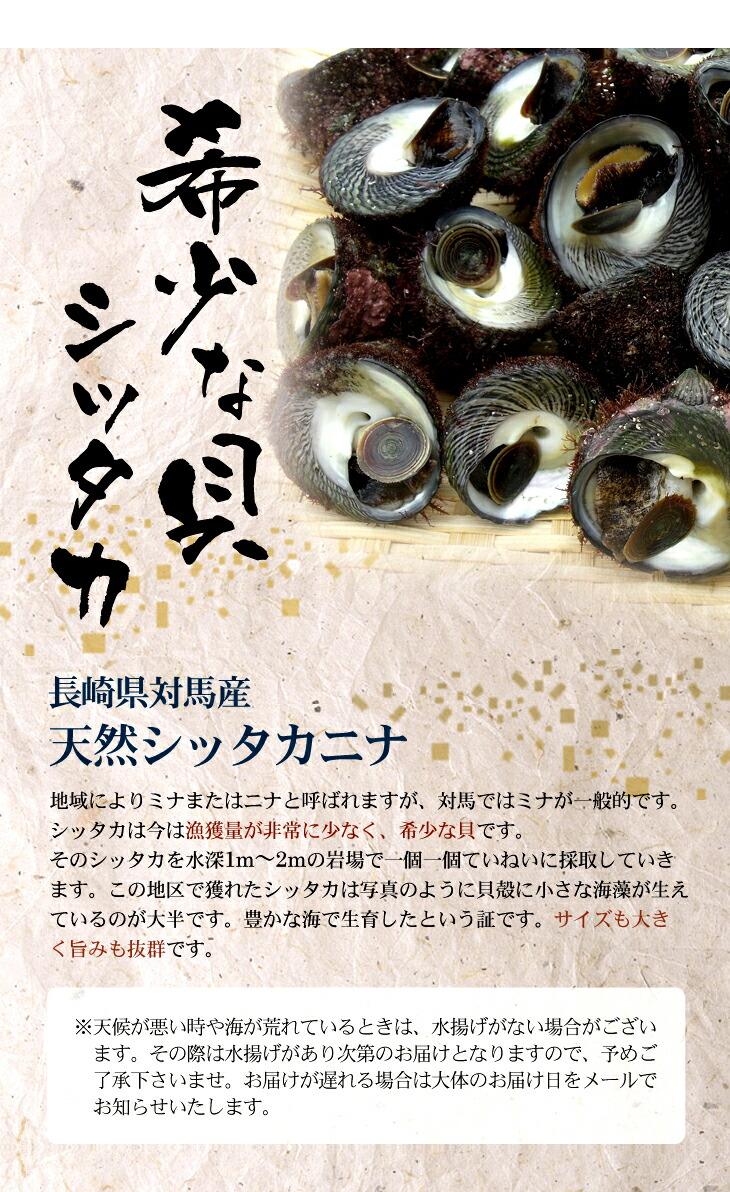 稀少な貝シッタカ