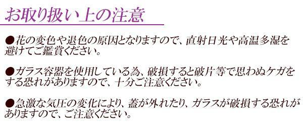 トーエー ピュアフラワー ドライフラワー ラン(蘭) 紫・ピンク P-SH-8「通販百貨 Happy Puppy」
