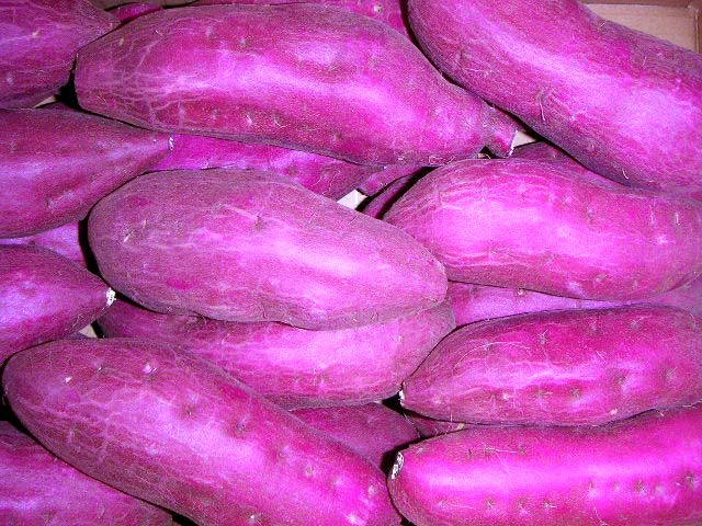 日本一の生産量 串間大束の紅寿甘藷。