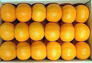 ビタミンCいっぱいの日南産ポンカン