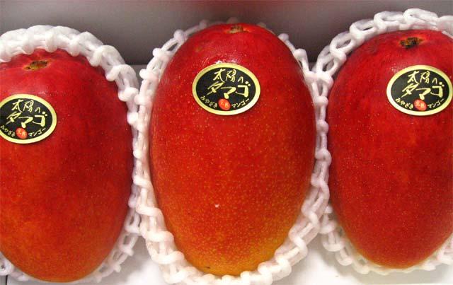 太陽のタマゴ宮崎産完熟マンゴーです。
