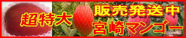 【超特大】宮崎産完熟マンゴー【赤秀】1玉650g化粧箱入り。