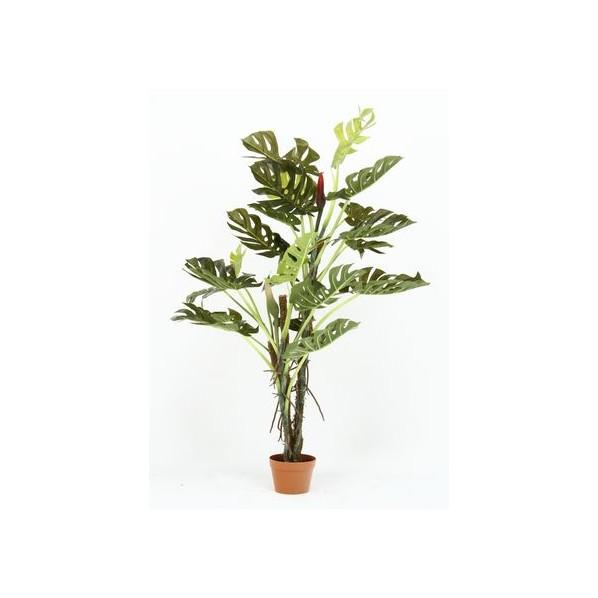 観葉植物 スプリット 22