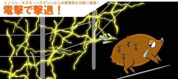 イノシシ 猪 電気 対策