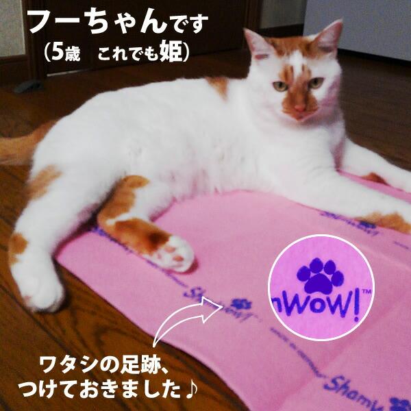 シャムワウ2箱で期間限定、ピンクワイドシャムワウプレゼント中!