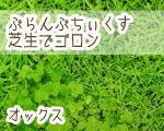 芝生でゴロン柄