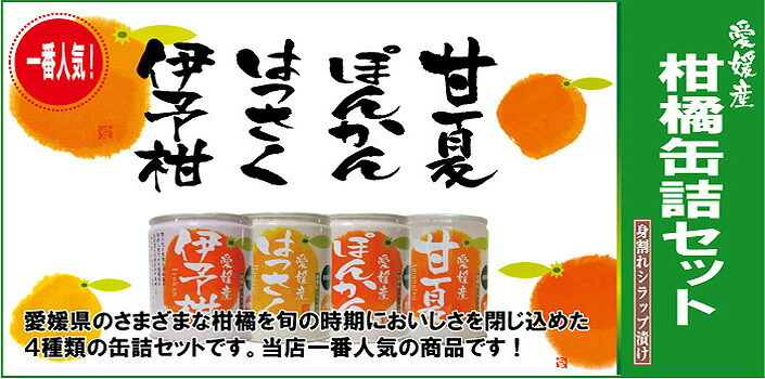 柑橘缶詰セット