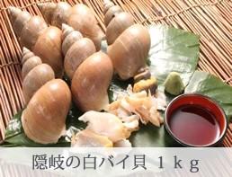 隠岐の白バイ貝 1kg