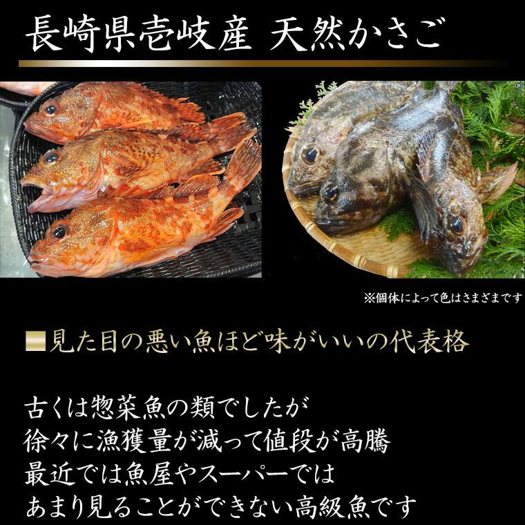 壱岐産天然寒かさごは高級魚
