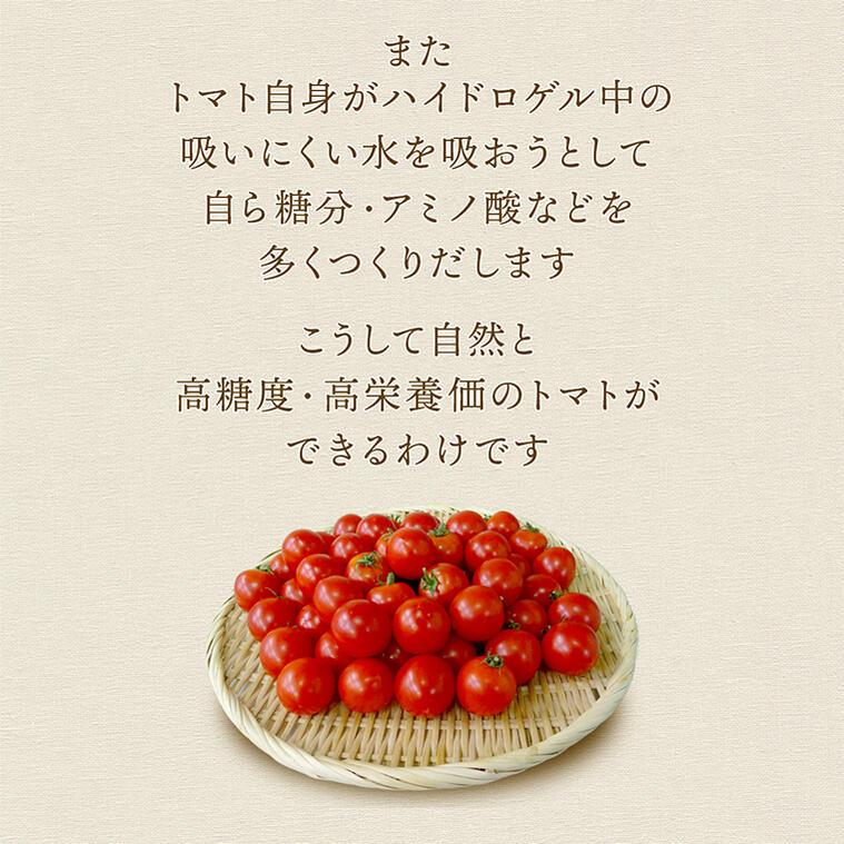 05 自分でおいしく育つトマトは糖度11
