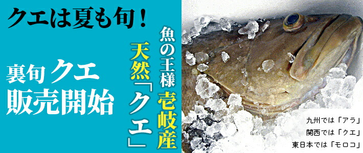 九州では「アラ」、関西では「クエ」、東日本では「モロコ」と呼ばれている魚の壱岐の天然もの。魚の王様ともいわれる高級魚です。下処理代無料!