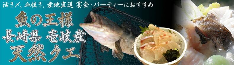 魚の王様 天然クエ バナー